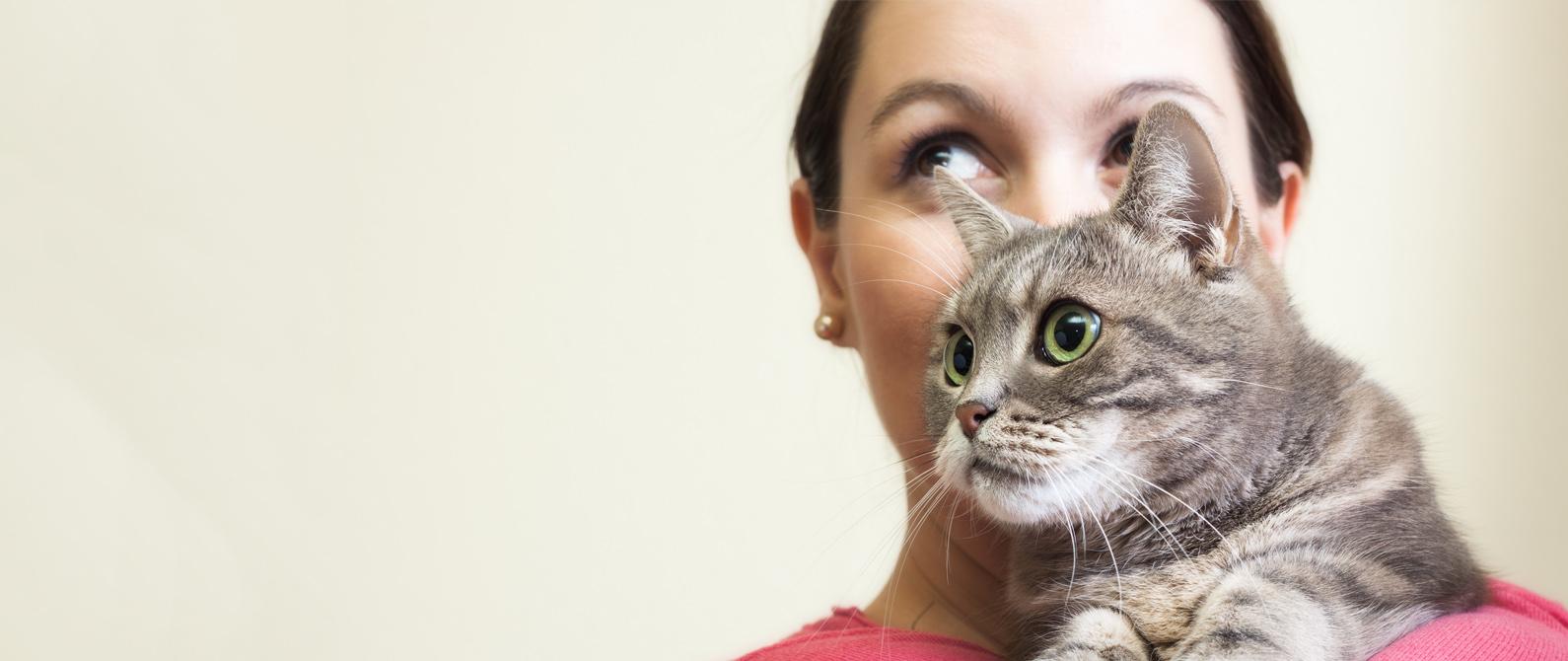 Cat Chick Southwoods Animal Hospital