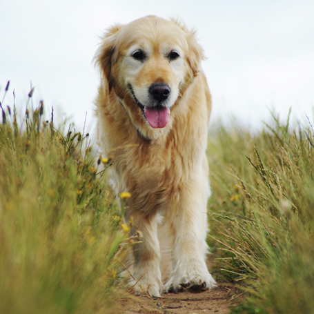 Animal Arthritis - Southwoods Animal Hospital